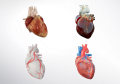 Ricoh & IBM Launch New Workflow Solution for 3D Printed Anatomical Models