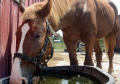 3D Printed Windpipe Insert Helps Amish Draft Horse Breathe Easy