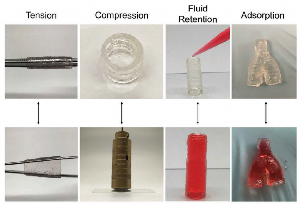 The 3D bioprinted blood vessel model in action. Photos via TAMU.